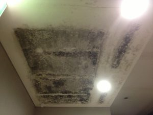 Mould Inspection - condensation mould growth